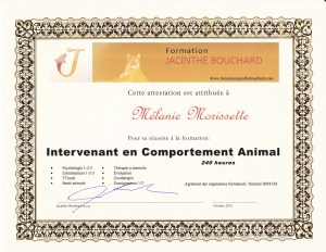 Intervenant en comportament animal Attestation Jacinthe Bouchard